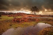 Storm Over The New Forest